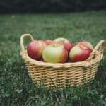 Best Apple Picking Orchards In America
