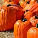 10 Great Pumpkin Patches Across the Country